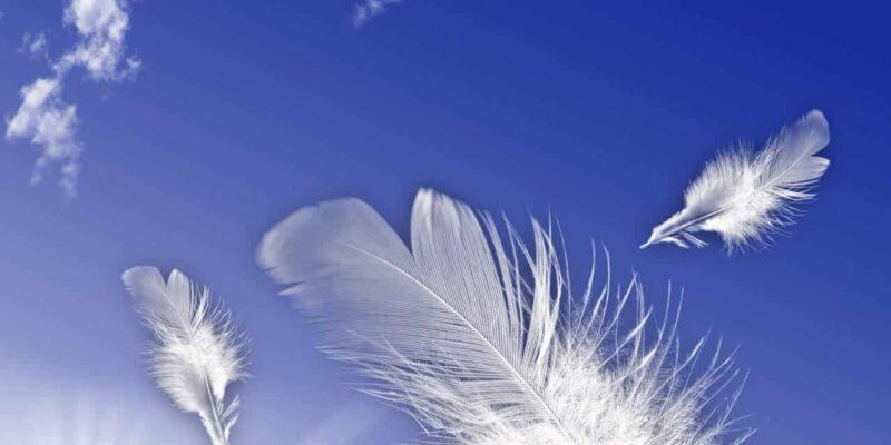feather fly 1308639 1279x1705 800x400 - Wypuszczanie białych gołębi na ślubie przez Parę Młodą