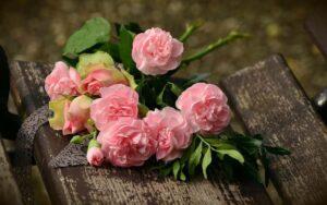 różowe goździki znaczenie kwiatów