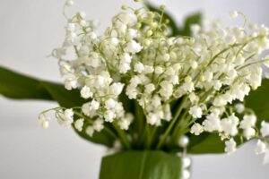konwalie 300x200 - Znaczenie kwiatów - znaczenie kolorów i ich symbolika