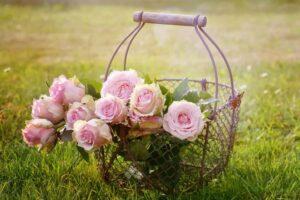 roze prowansalskie 300x200 - Znaczenie kwiatów - znaczenie kolorów i ich symbolika